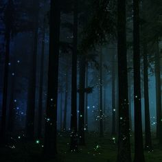 firefly forest