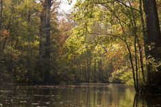 Wambaw Creek Wilderness Canoe Trail, Francis Marion National Forest, SC, and 13 other best places to canoe and kayak through national forests