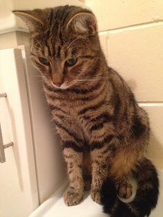 Toby Cat | Pawshake