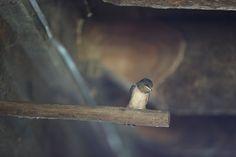 The Last Baby Sparrow by Jon Katz - Bedlam Farm