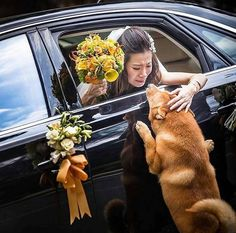 The emotional photo of a bride and her dog will make you kiss your loyal canine Cute Baby Animals, Animals And Pets, Funny Animals, Cute Puppies, Dogs And Puppies, Cute Dogs, Dog Life, Dog Pictures, I Love Dogs