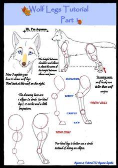Wolf legs tutorial PART 1 by Aquene-lupetta.deviantart.com on @DeviantArt