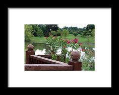 pink, flower, pond, tree, nature, rail, toledo, ohio, botanical, garden, landscape