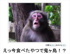 あなたは「桃太郎」三部作を観たか? 「ボケて」による同行した猿の災難 - http://naniomo.com/archives/2400