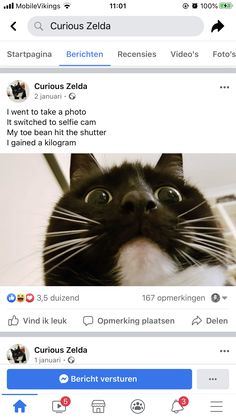 Cute Funny Animals, Funny Cute, Cute Cats, Hilarious, Puppies And Kitties, Cute Puppies, Cats And Kittens, Animal Poems, Poem Memes