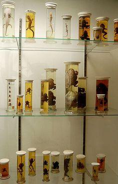 Berlin museum, pickled animals .