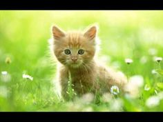 Cute Kittens and Kittens - Cute Cats Best Video TOP 10 Compilation NEW MORE VIDEOS HERE https://www.youtube.com/watch?v=InDJc2L_5dA&list=PLC_HjotBFMpNqd0u6cYK0NtHBXcOIEEoD   SUBSCRIBE: http://www.youtube.com/user/TheFederic777?sub_confirmation=1   #Kittens #Cats #CuteKittens