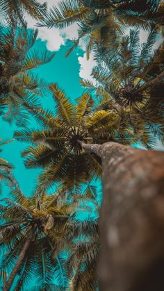 Palm tree background horizontal 45 New Ideas Cloud Wallpaper, Ocean Wallpaper, Summer Wallpaper, Iphone Background Wallpaper, Aesthetic Iphone Wallpaper, Nature Wallpaper, Aesthetic Wallpapers, Iphone Wallpaper Tropical, Strand Wallpaper