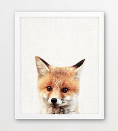 Baby Fox Print, Animal Print, Woodland Animals Fox Print, Nursery Wall Art, Cute Fox Photography, Kids Room Nursery Decor, Printable Digital  Print out this artwork from your home printer or local print shop to decorate your home or office. This file can be printed on size papers from 4x6, 5x7, 8x10, up to 11x14. You can use any paper you like (matte, textured, gloss etc) and any style frame to mount it to your wall. Makes great last minute gift.   ** This is a DIGITAL printable file. NO…