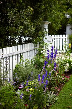 Is the white picket fence a thing of the past? Read our post to discover awesome 32 white picket fence ideas that'll prove otherwise! Picket Fence Garden, White Picket Fence, White Fence, Picket Fences, White Garden Fence, Garden Fences, Black Fence, Fence Gate, Fence Panels