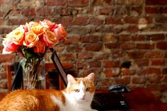 exposed brick, flowers and a dream pet :)
