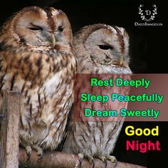 Rest Deeply Sleep Peacefully Dream Sweetly, Good Night #GoodNight #quotes