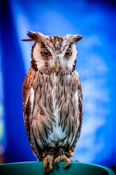 Owl portrait | Amazing Pictures