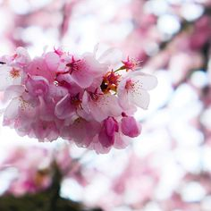 Upload your best weather photos or watch them in our searchable gallery. Weather Network, Rose, Spring, Flowers, Plants, Pink, Florals, Roses, Planters