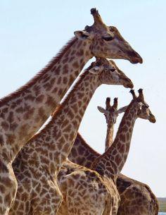 Botswana  Chobe NP  Kasane   Endless Wildlife