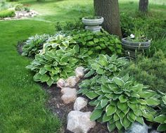 Add rocks to hasta garden - marks for me for early flower seeding + shelters  from dog + kids