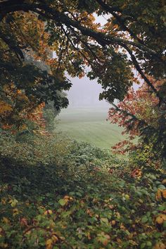 Untitled by Rose Clements | Flickr - Photo Sharing! - lovely Autumnal picture