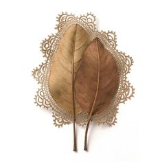 If you are an artist, everything is a medium, and Susanna Bauer is a perfect example of that. Constructed with leaves and finely woven cotton thread crochet, her works hold a delicate balance of fragility and strength. Art Au Crochet, Thread Crochet, Crochet Leaves, Crochet Crafts, Decorative Leaves, Dry Leaf, Human Connection, Leaf Art, Fine Art