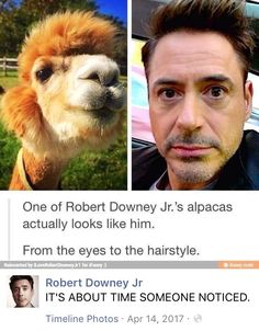RDJ's response is golden.  and why does the fact that he has alpacas not surprise me??