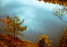 Woods #finland #autumn