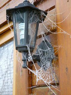 Spider Web More