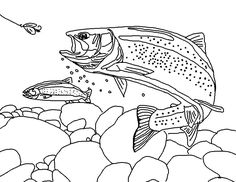 rainbow trout drawing template | Rainbow Trout (Landscape)