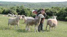 Down on the Farm: With Farm Animal Whisperer Susie Coston