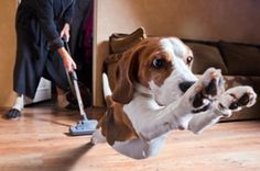 The Best Canister Vacuum for Pet Hair - Canister Vacuum Experts