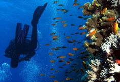 Conserving air on a dive is one of the most important skills you'll learn, because the less air you use, the more of the underwater world you can see!