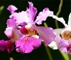 Orchid World Barbados deserves it's own pin - a truly memorable excursion on our Western Carribean cruise.