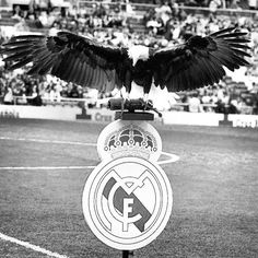 Instagram photo by @rm_pics (Real Madrid C.F. FANPAGE) | Statigram Pure Football, First Football, Real Madrid, Real Soccer, Lo Real, Sports Pictures, Sons, Calm, Memories