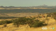 Virtual Field Trip to the Deserts and Grasslands of Africa.  Fantastic video is accompanied by excellent free downloadable lesson plans.  Sponsored by Nature Works Everywhere and the Nature Conservancy.