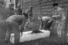 Nazi Collaborators Executed In France (PHOTOS): Chilling Images From LIFE.com
