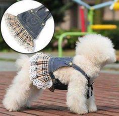 Resultado de imagen para patrones de moda canina