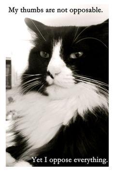 Henri, La Chat Noir