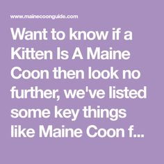 Want to know if a Kitten Is A Maine Coon then look no further, we've listed some key things like Maine Coon fur thickness, Body Size and Traits to look for