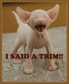 How I feel after most of my haircuts these days.