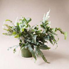 Raw Earth Hanging Planter - Chalk White– Pigment Living Wall Planter, Wall Planters, Large Hanging Planters, Let It Shine, Self Watering, Milk Jug, Low Lights, Ferns