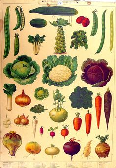 the old school's educational board - summer and vegetables Botanical Drawings, Botanical Illustration, Botanical Prints, Illustration Art, Science Art, Science And Nature, Vintage Prints, Vintage Art, Vegetable Pictures