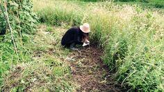 仕事帰りに自然農畑の草刈りしてきた(^O^) 目線の高さまでワッサワサ(笑) 残り半分、明日も頑張るよ~♪(lunavege)