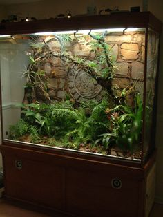 New terrarium build mayan style - Page 2 - Dendroboard Tarantula Enclosure, Reptile Enclosure, Reptile Room, Reptile Cage, Animal Room, Animal House, Vivarium, Lizard Terrarium, Cute Reptiles