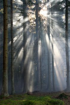 Sun Beams, Varmland, Sweden - photo via forest Forest Light, Tree Forest, Forest Scenery, Misty Forest, Beautiful World, Beautiful Places, Beautiful Pictures, Great Photos, Beautiful Landscapes