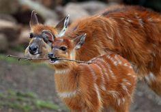 Resultado de imagem para animais  com as crias