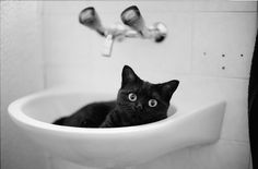 Sink the Cat