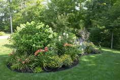 Lime light Hydrangea with day lilies & coreposis. Lime light hydrangeas can take full sun! Garden Shrubs, Shade Garden, Lawn And Garden, Garden Bed, Garden Plants, Hydrangea Landscaping, Front Yard Landscaping, Front Walkway, Cottage Garden Plan