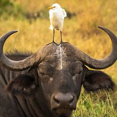 Fühlst du dich auch irgendwie beschissen?  Comedy Wildlife Photo Awards Shortlist