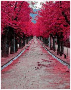 nickelsonwooster:    Color service.  aandhmag:    Nature….the greatest color palette.