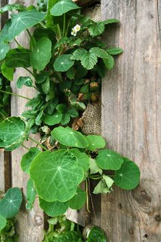 Odling i lastpall tillverkad för Hattavikens uteservering. #pallet #lastpall #odling #pallet