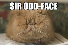 20 Ridiculous Cat Names