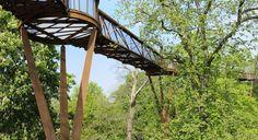 Kew's Treetop Walkway, los árboles desde el punto de vista de los pájaros  - Aleph